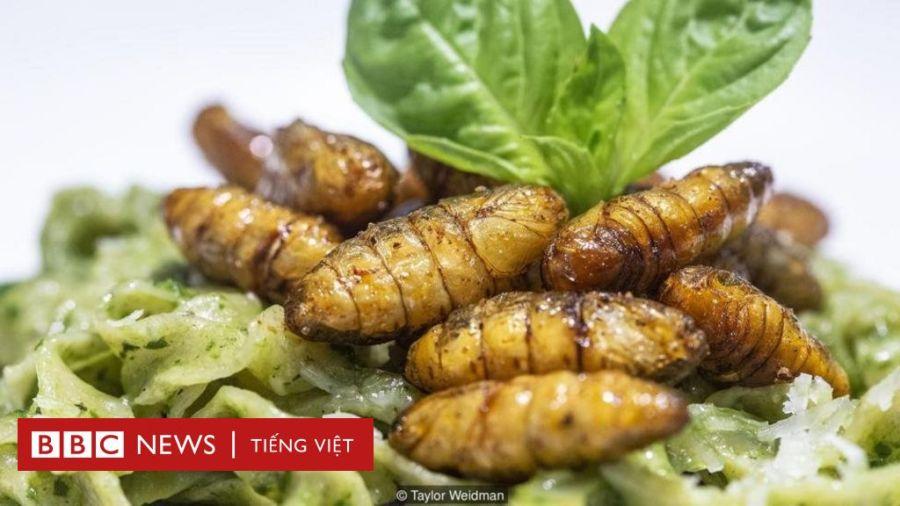 EU cho phép Việt Nam xuất khẩu thực phẩm làm từ côn trùng vàoEU
